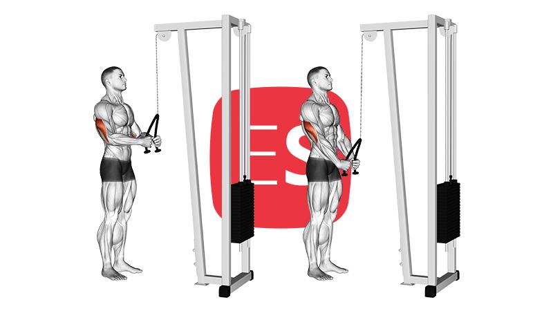 cb-triceps-pushdown-rope