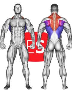 μύες της πλάτης